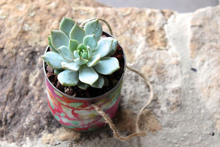 diy succulent_mayday_jsorelle