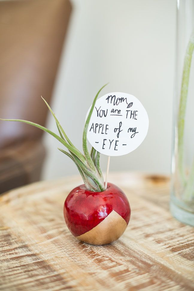 diy-mothers-day-gift-air-plant-planter-apple-gold-red