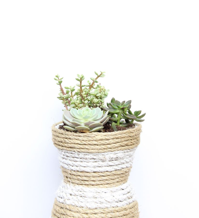 diy-rope-stripes-planter-succulents