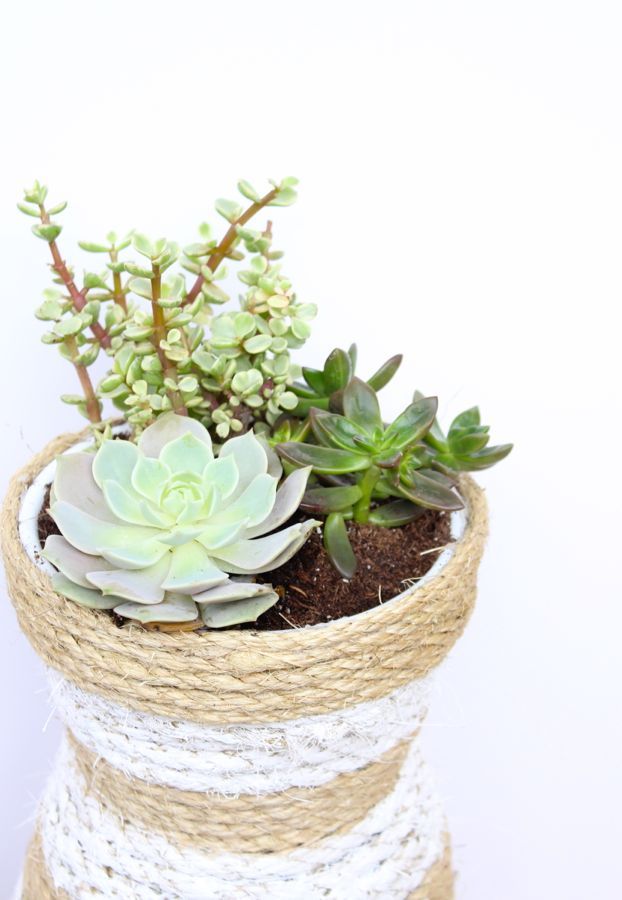 succulents-rope-white-stripes-hourglass-planter
