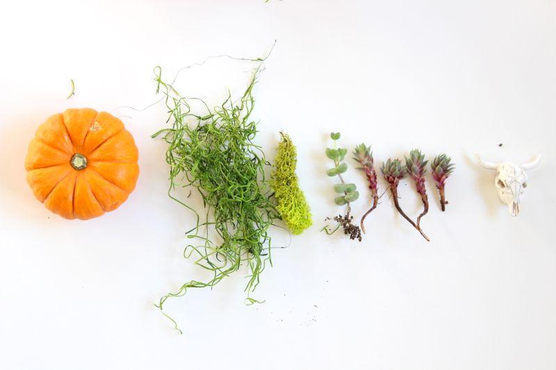 pumpkin-plants-succulent-moss
