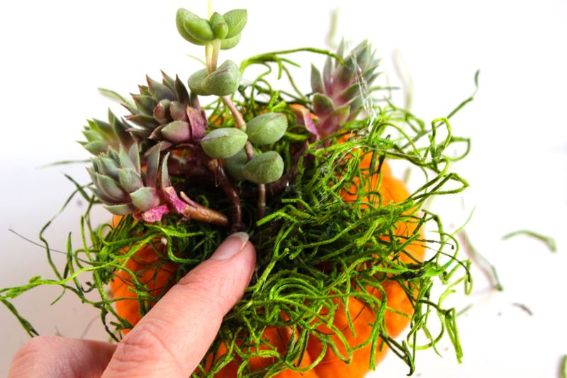 pumpkin-planter-succulent
