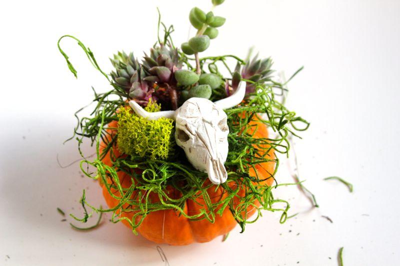 succulent-planter-skull-pumpkin