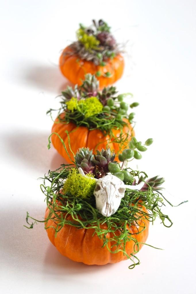 succulent-planters-pumpkin-arrangements-skull