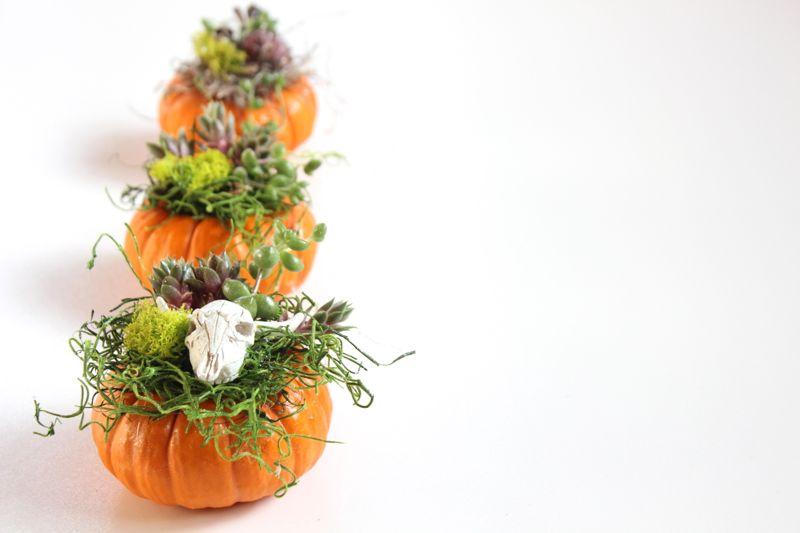 pumpkin-succulent-planters