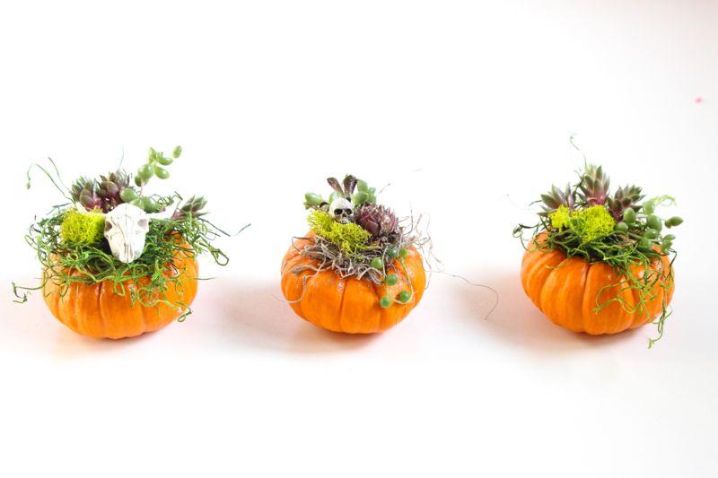 succulent-planter-pumpkin-halloween-centerpiece-diy