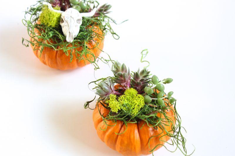 pumpkin-succulent-planter