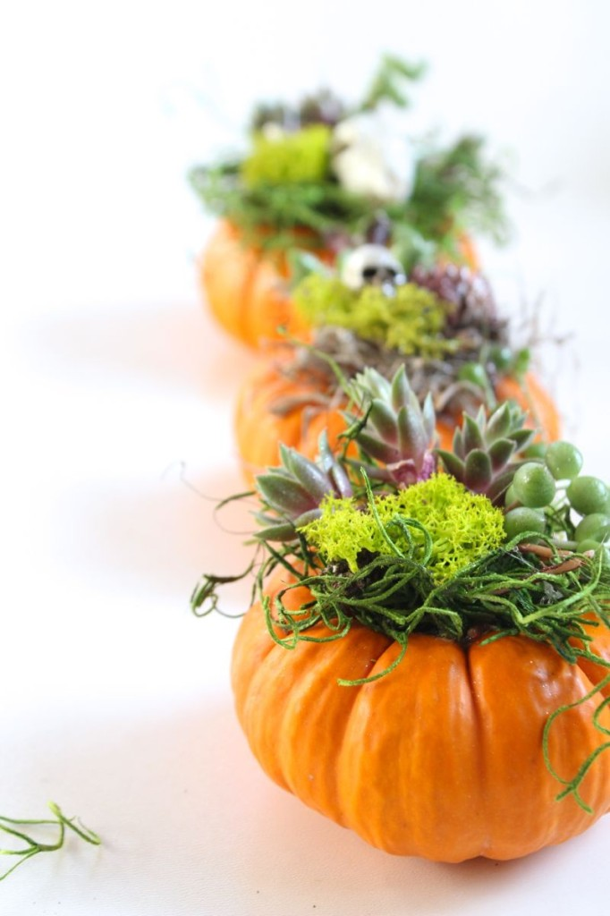 pumpkin-succulent-planter-halloween