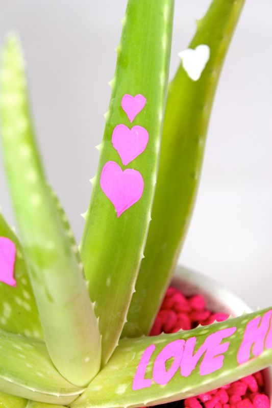 love-heals-aloe-plant-gift-valentines-day-pink-hearts-diy