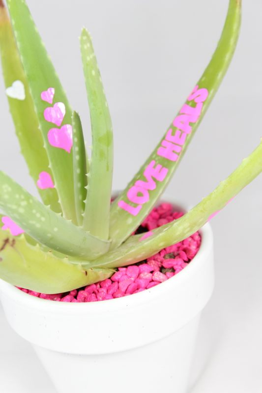love-heals-aloe-plant-gift-valentines-day-pink-hearts-diy