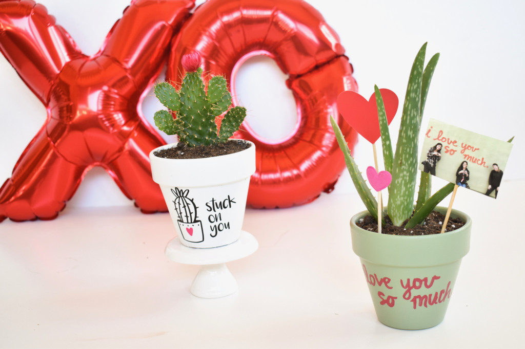 DIY valentines day planter-cactus-austin-love-wall-i-love-you-so-much-stuck-on-you